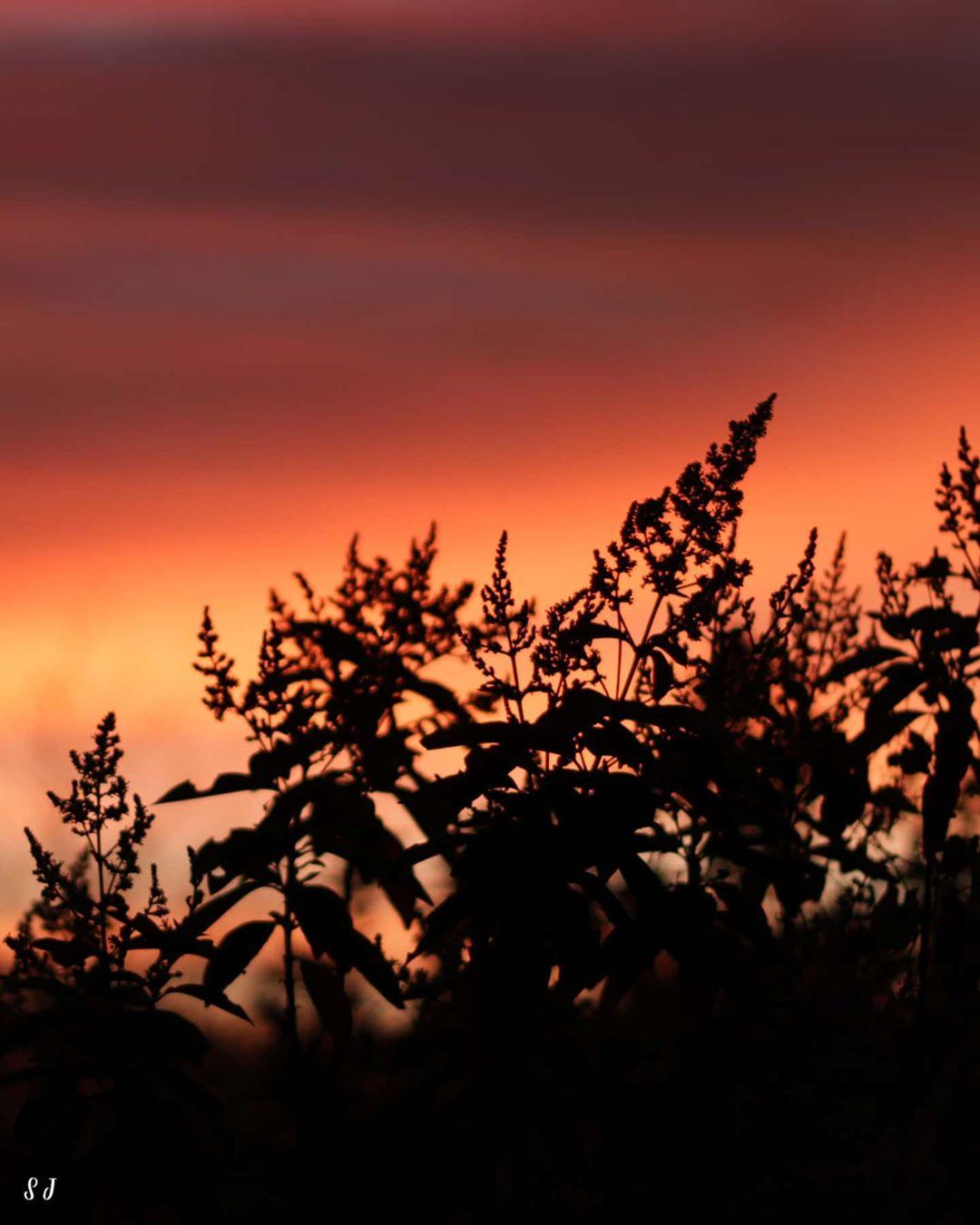 Morning reddish sky